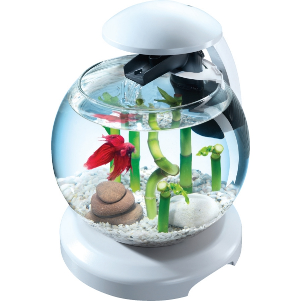 Transformer son aquarium en v ritable accessoire d co for Nourriture poisson combattant