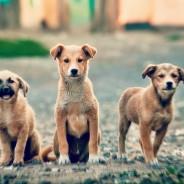 Top 3 des raisons qui vous pousseront à adopter un chien et pas un chiot
