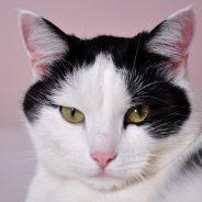 Apprendre à votre chat à obéir : mes conseils pour y arriver