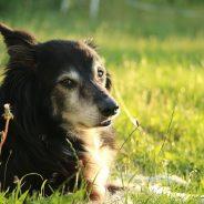 Collier pour chien : le guide pour bien choisir