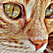Maladies, soins, alimentation : zoom sur la santé du chat