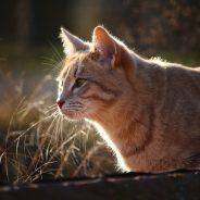 Les secrets pour vous faire aimer de votre chat