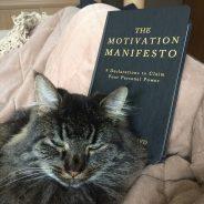Dossier : l'éducation des chats