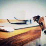 Bon plan : achetez moins cher en commandant sur une animalerie en ligne !