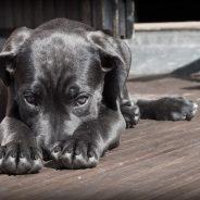 Méditation avec son chien: les avantages du doga