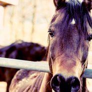 L'aménagement parfait pour le bien de vos chevaux !