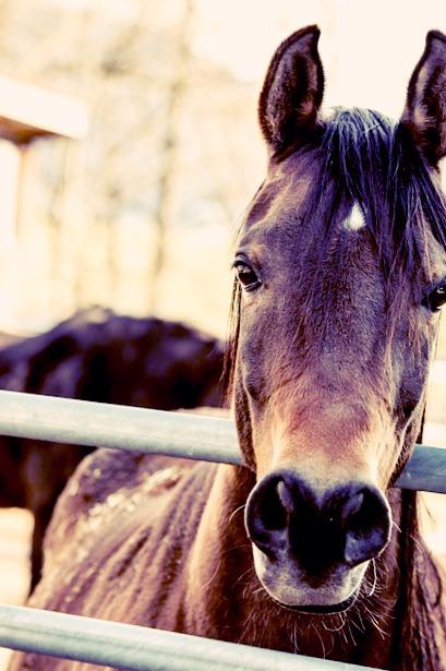 Vos chevaux à l'abris grâce à des clôtures de qualités !
