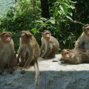 Conscience animale : les animaux ont-ils une conscience ?
