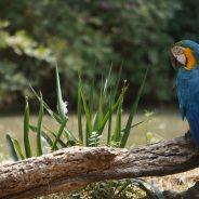 Tout savoir sur l'apprentissage de la parole chez les perroquets