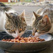 Comment alimenter un chat ?